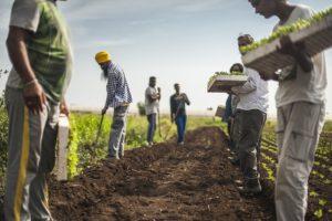 EUnews – 'The Harvest', in Parlamento Ue la denuncia del lato insostenibile del made in Italy